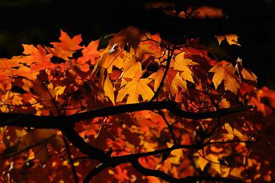 2009 Fall Foliage