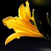 May 29, 2009<br /> Backlit flower