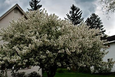 2009 Spring-223