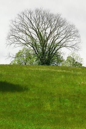 2010-05: Stone Barns