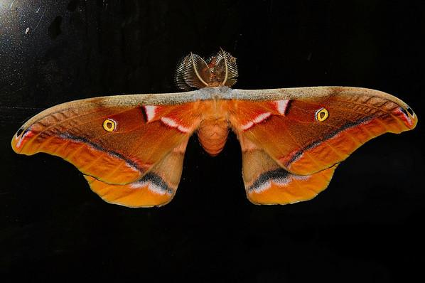 2010-09-14 FBIT Moth R2J