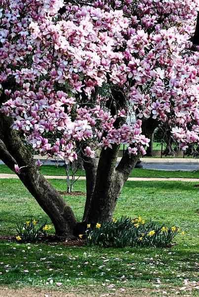 2010 Cherry Blossom Festival DC