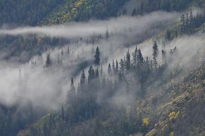 Trees and fog, Glacier National Park.