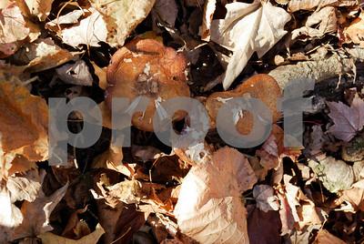 DogsWood_053