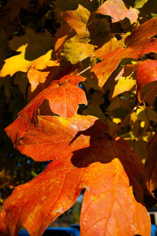 11-09-2010 Fall Colors