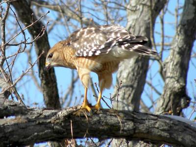 2010 Bird (1) - Jan-Mar