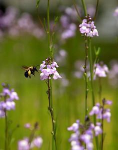 Bee 04