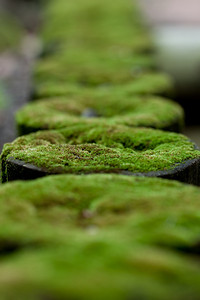 Moss on the posts in the backyard
