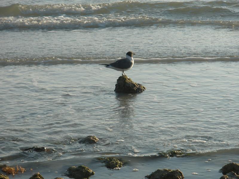 Bird on Rock - Honeymoon Island