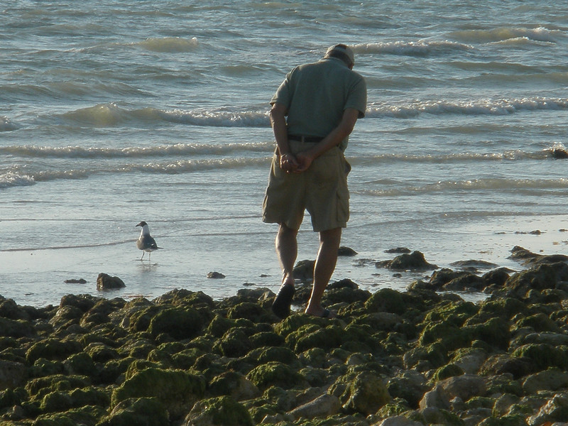 Mike Sarafolean searching for shells on Honeymoon Island