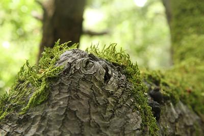 Jabba the Hut Tree