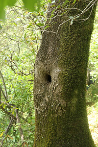 A Tree's Belly Button