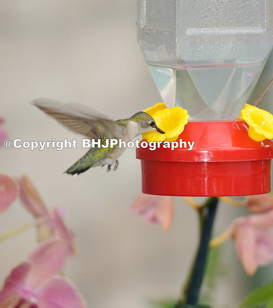 2011-09-16 Hummingbirds 101