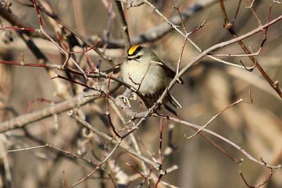 2011 Bird (1) - Jan-Mar
