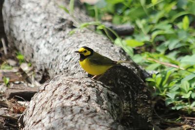 2011 Bird (2) - Apr-Jun