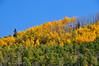 Aspens on the north side of the Grand Mesa plateau.
