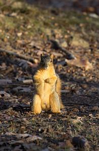 Squirrel posing for photo, December 17, Lone Elk Park