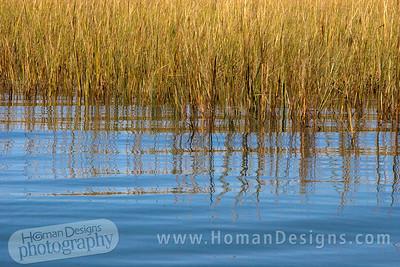 The marsh of Carrot Island at Rachel Carson preserve.