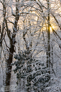 Sunrise on a snowy morning.