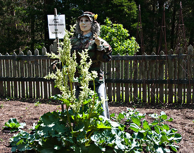 Our Goddess of the Garden... joins a revolution this year.