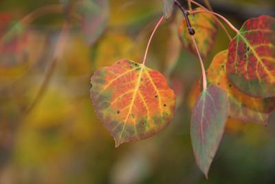 2011-10-Nature