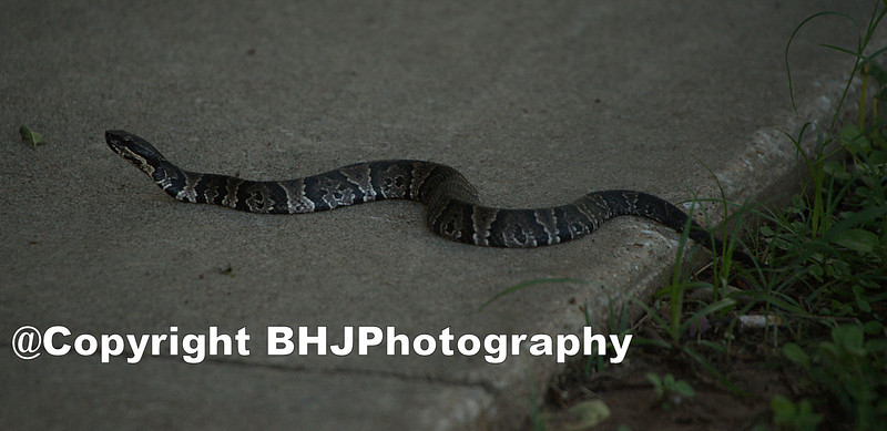 This snake greeted me when I arrived at the park.