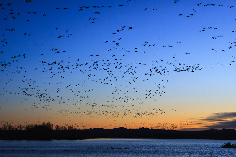 Bosque Del Apache<br /> National Wildlife Refuge