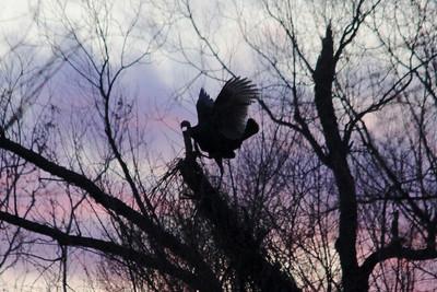 2012 Bird (1) - Jan-Mar