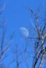 Moon over Trees @ Big Muddy NFWR