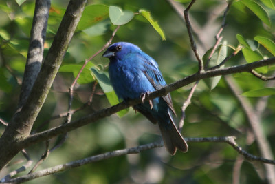 2012 Bird (2) - Apr-Jun
