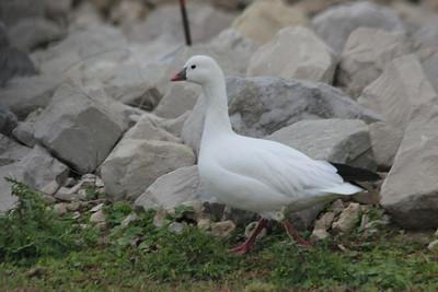 2012 Bird (4) - Oct-Dec