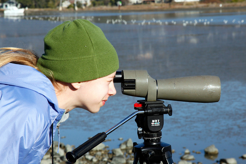 Lana Smith-Callies, 12, of Corte Madera, a student at San Domenico, uses a scope to count birds in the 2nd annual Winter Youth Bird Count near Pickleweed Park in San Rafael, Calif. on Saturday, January 14,  2012. Bird populations are tallied by the kids who enter the information on computers into a national database called EBIRD.(Special to the IJ/Jocelyn Knight)