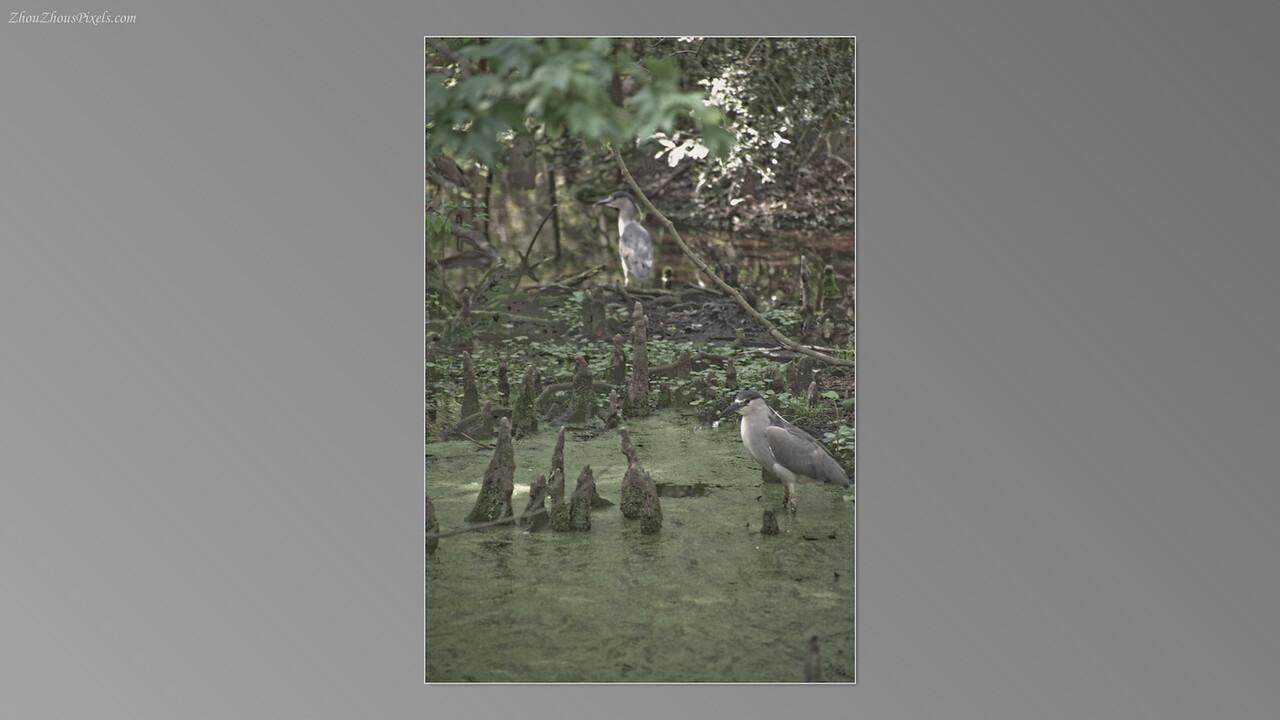 2012_03_29-5 (Brookgreen Gardens)-036