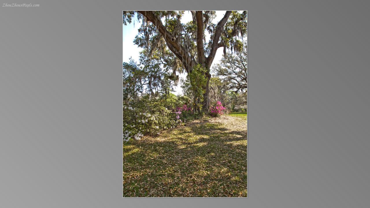 2012_03_29-5 (Brookgreen Gardens)-019