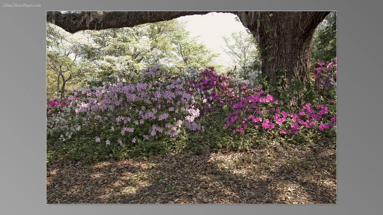 2012_03_29-5 (Brookgreen Gardens)-017