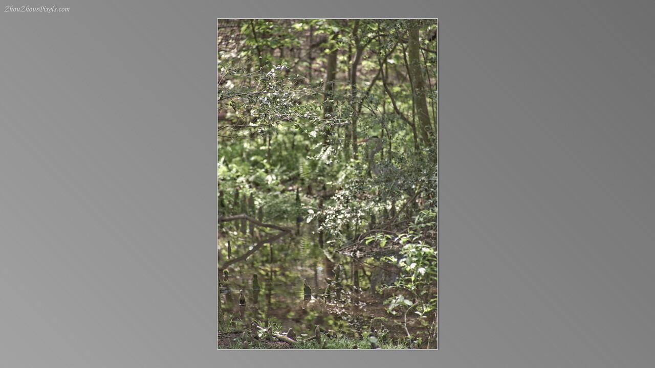2012_03_29-5 (Brookgreen Gardens)-045