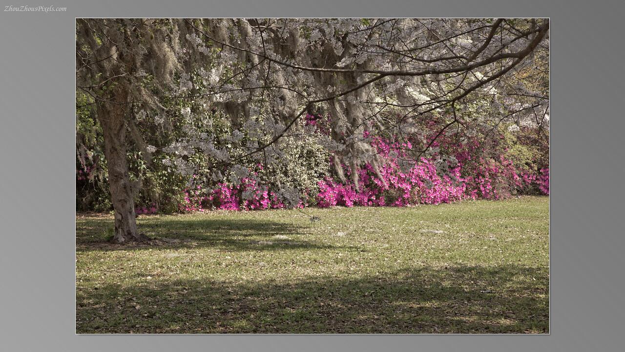 2012_03_29-5 (Brookgreen Gardens)-026