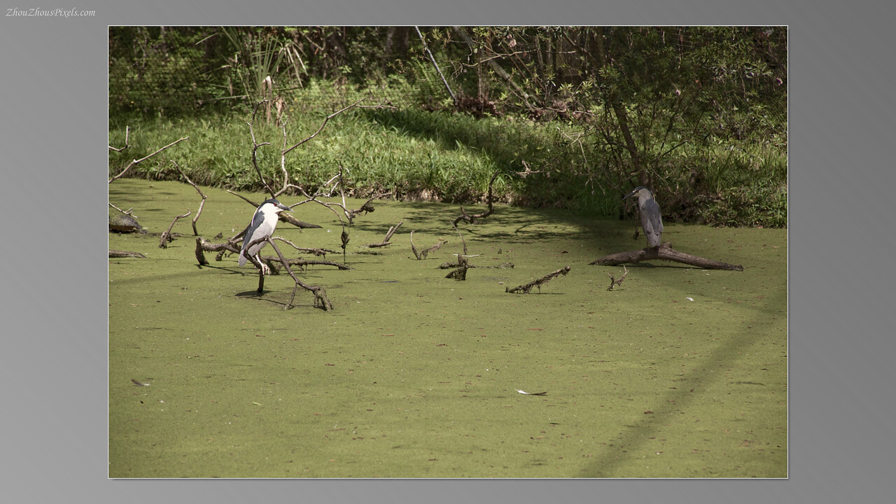 2012_03_29-5 (Brookgreen Gardens)-032