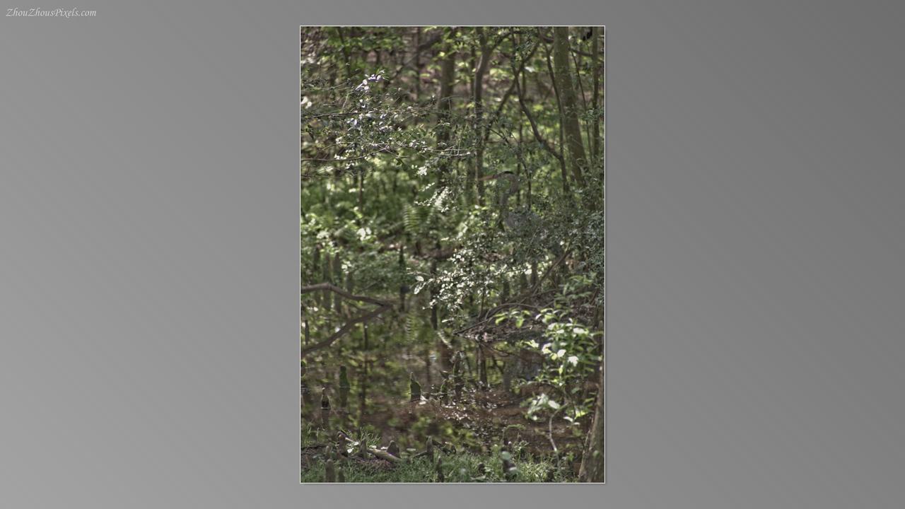 2012_03_29-5 (Brookgreen Gardens)-046