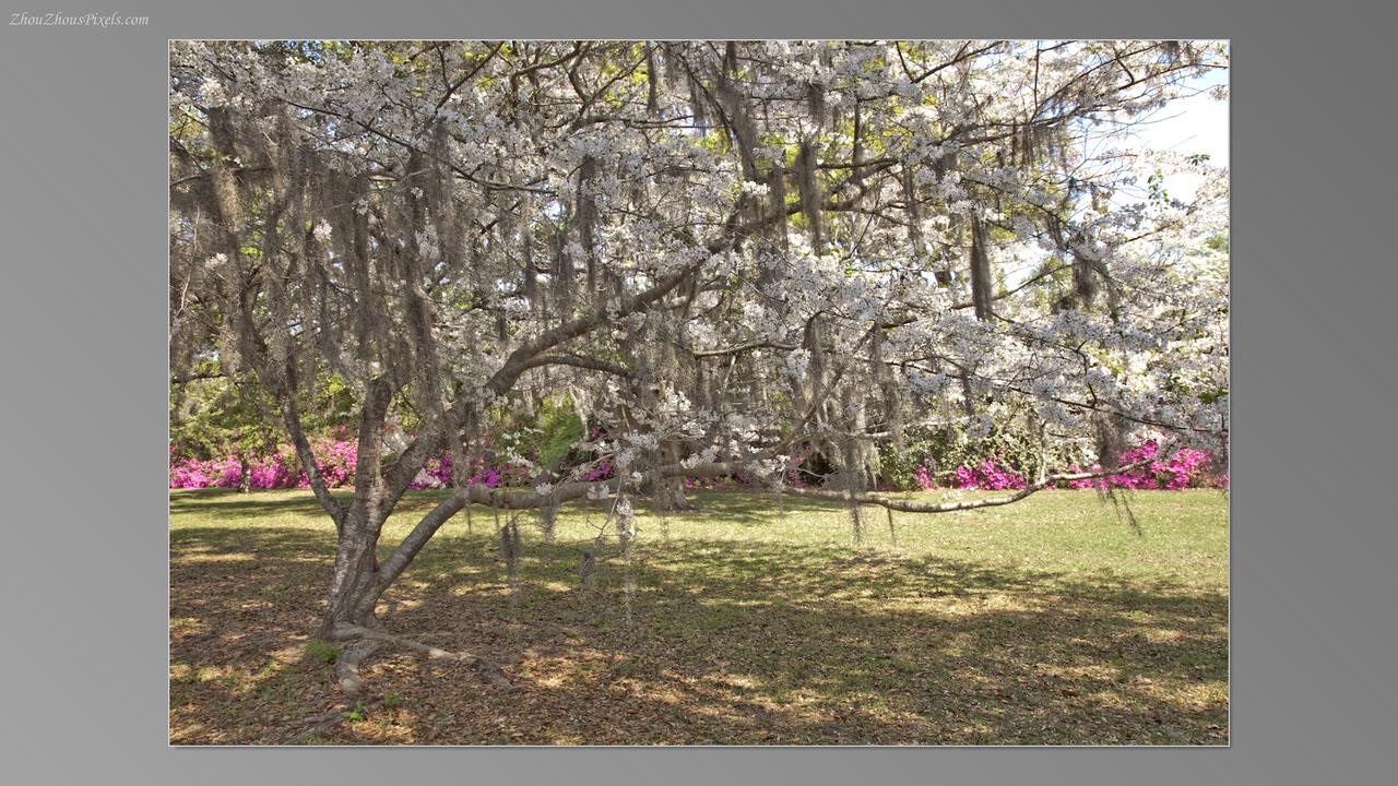2012_03_29-5 (Brookgreen Gardens)-028