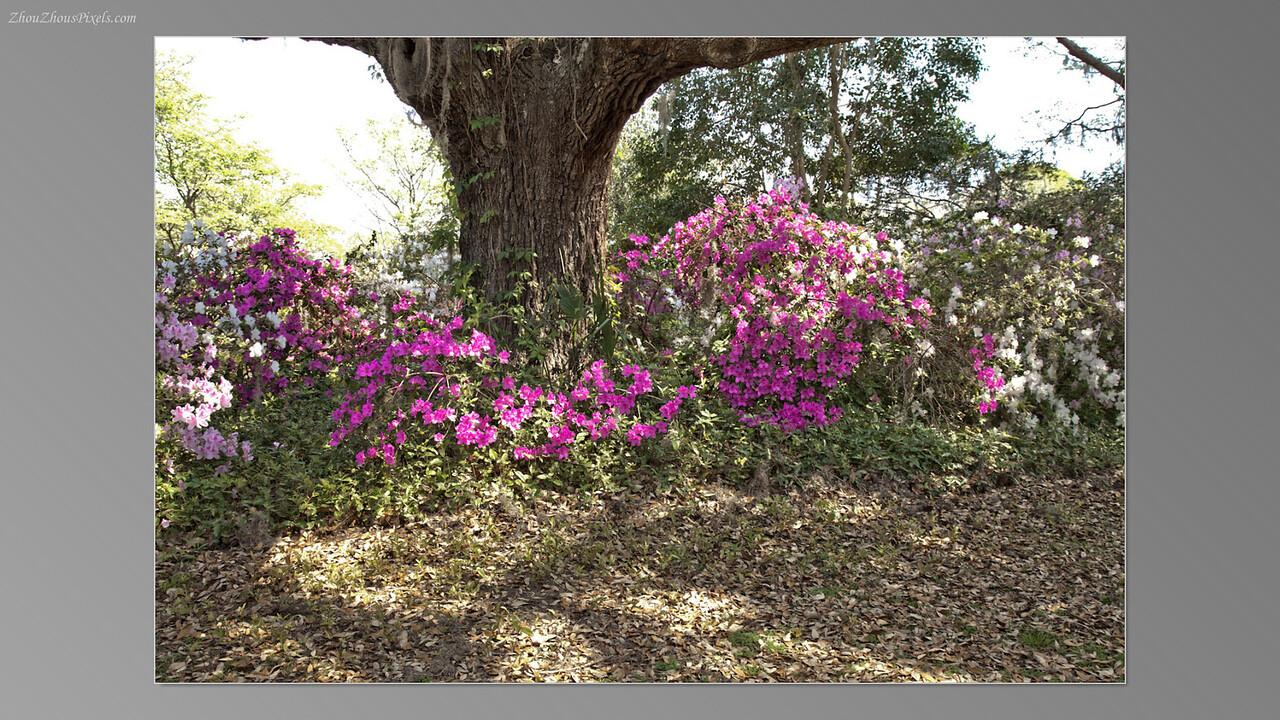 2012_03_29-5 (Brookgreen Gardens)-018