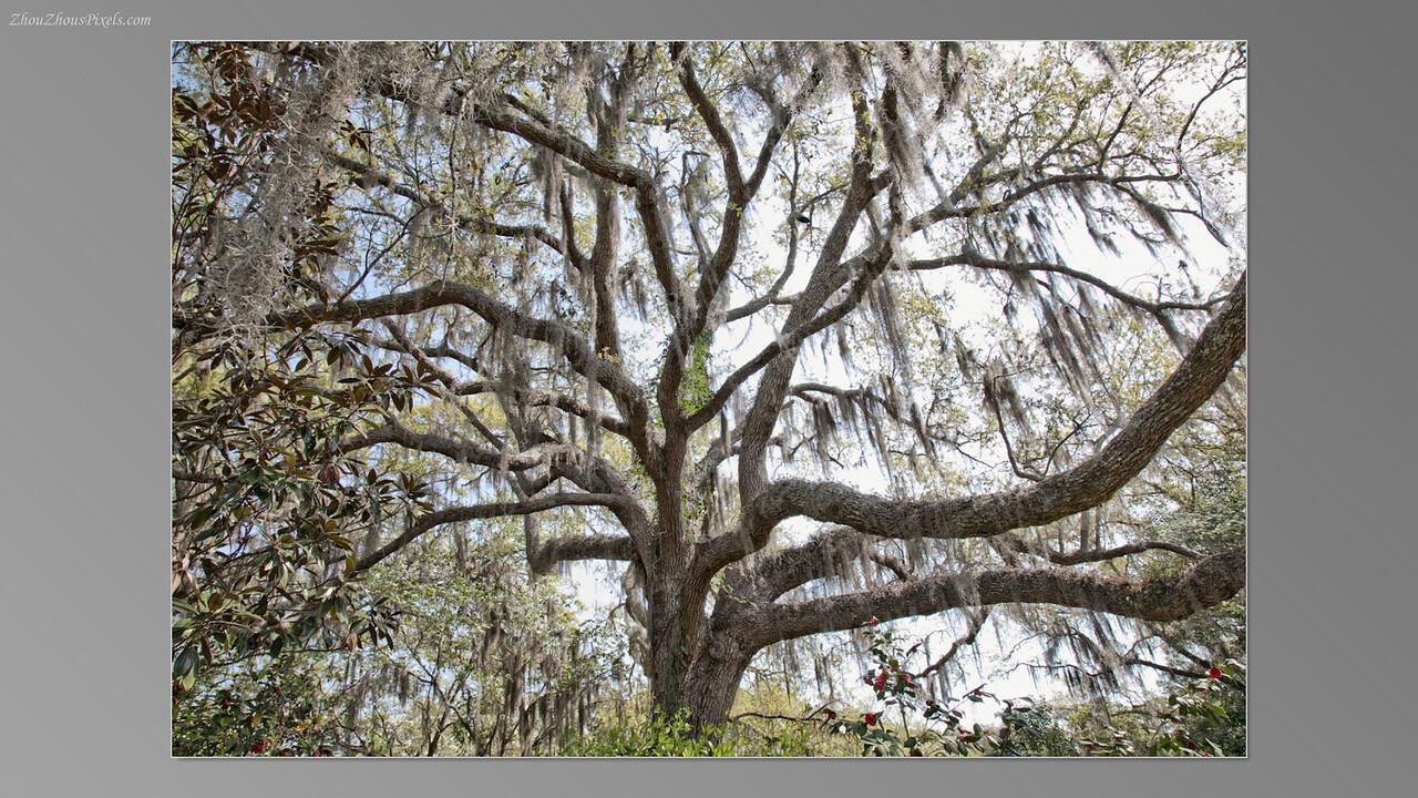 2012_03_29-5 (Brookgreen Gardens)-004