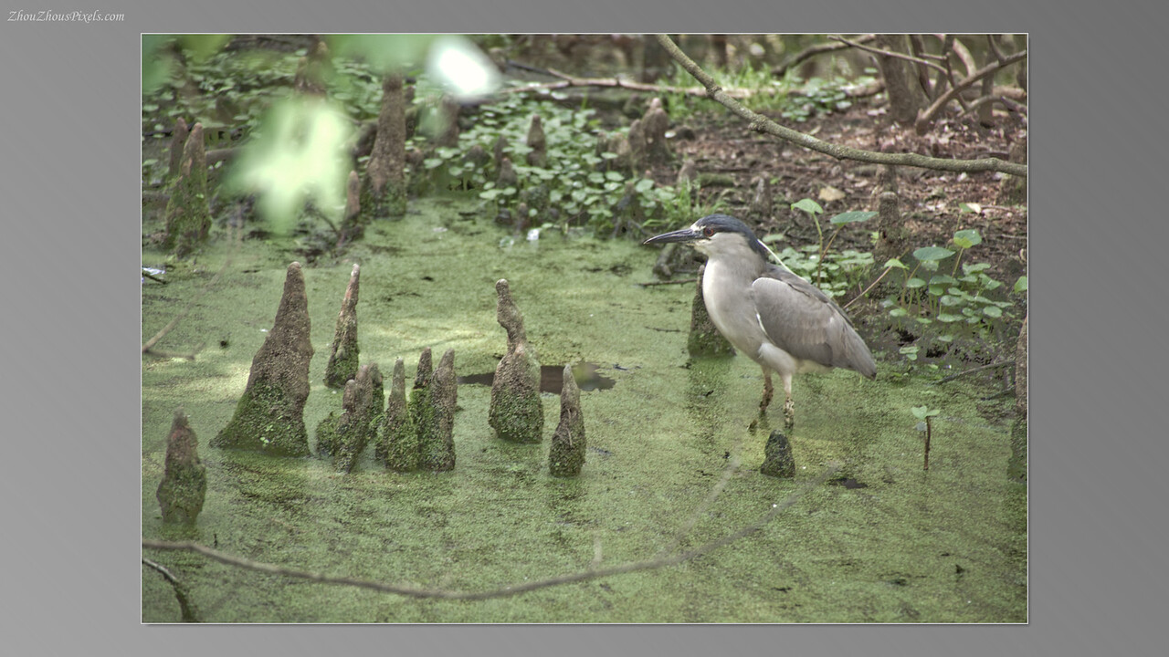 2012_03_29-5 (Brookgreen Gardens)-034