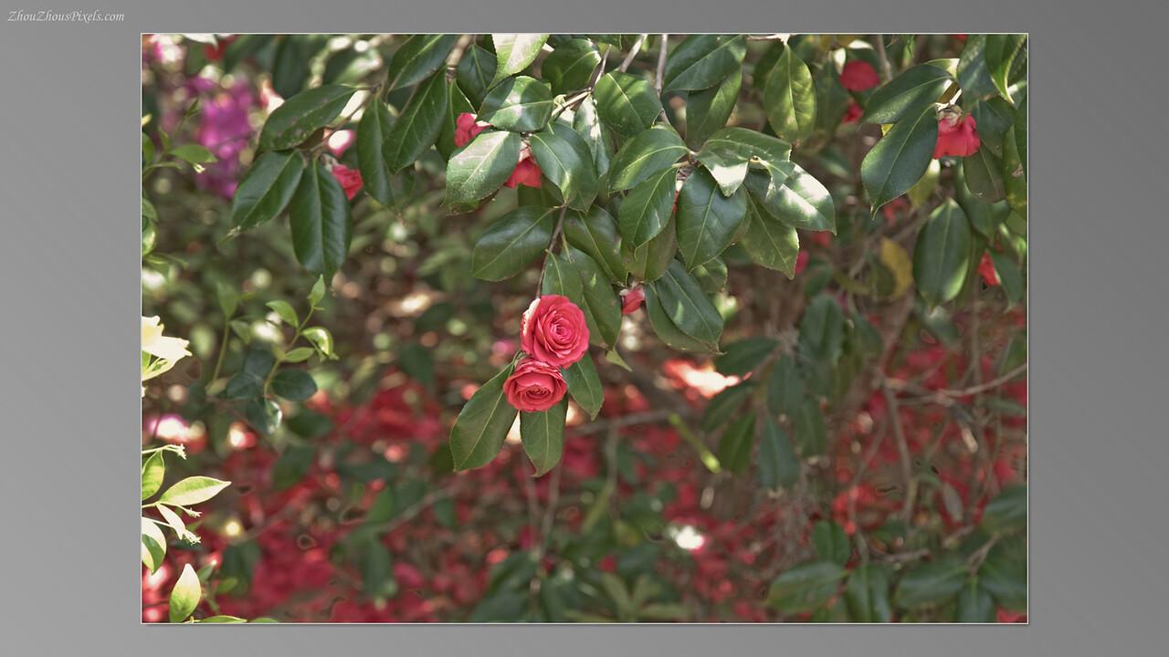 2012_03_29-5 (Brookgreen Gardens)-005