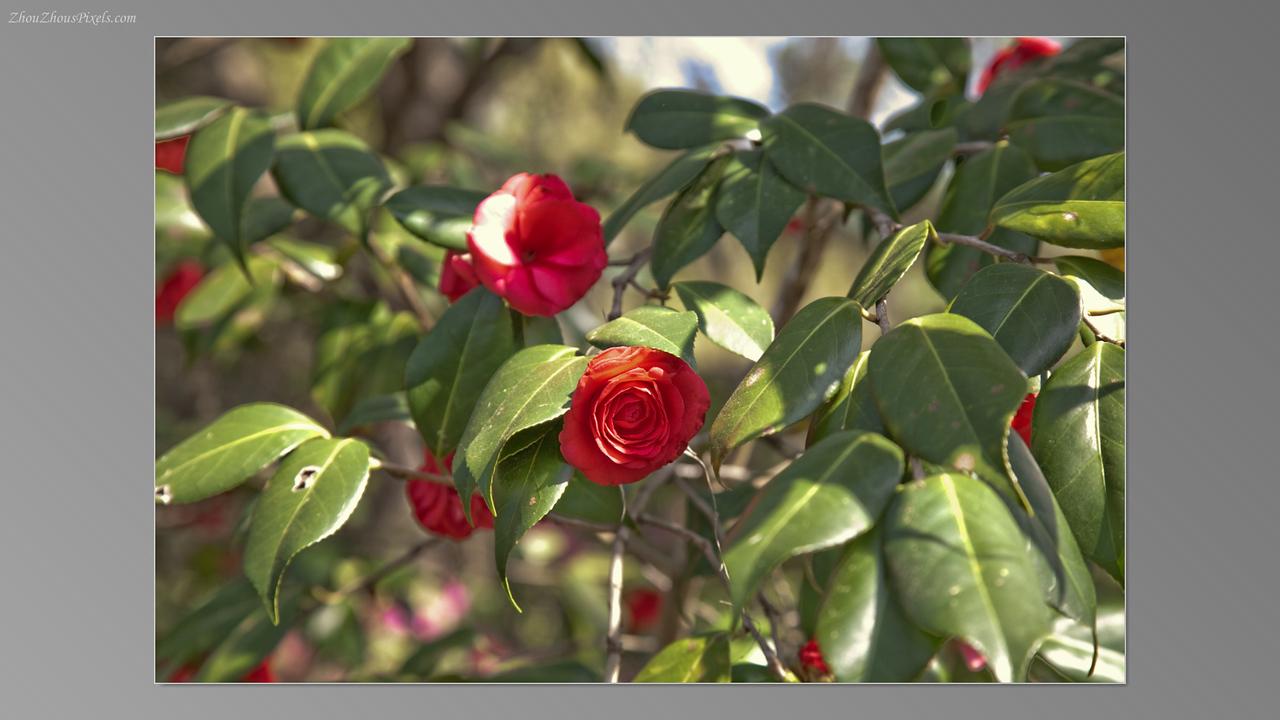 2012_03_29-5 (Brookgreen Gardens)-007