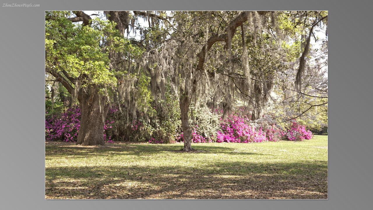2012_03_29-5 (Brookgreen Gardens)-023