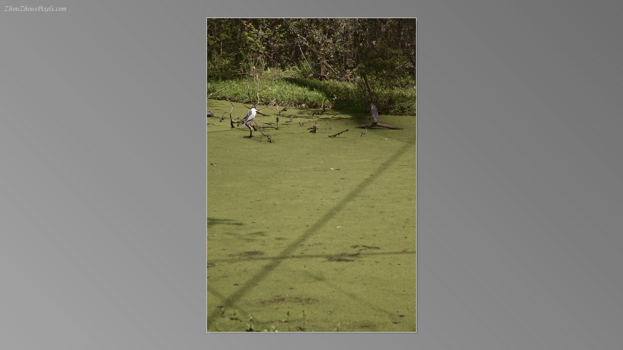 2012_03_29-5 (Brookgreen Gardens)-031