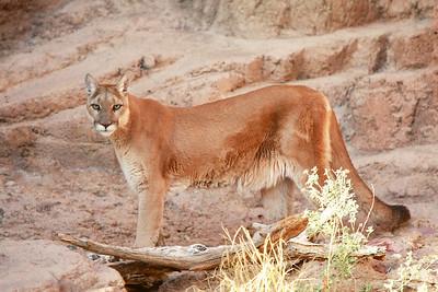 Tucson-20121211-031