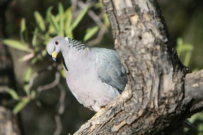 Tucson-20121211-002