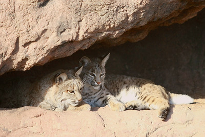 Tucson-20121211-021